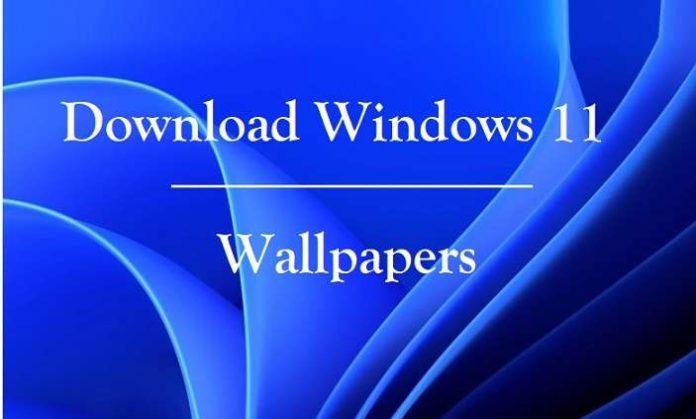 Download Windows 11 Wallpapers